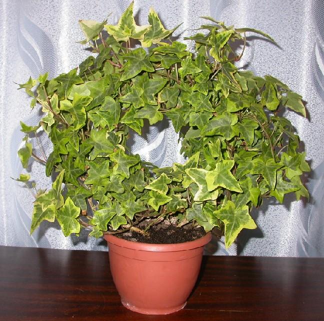 Комнатные растения L